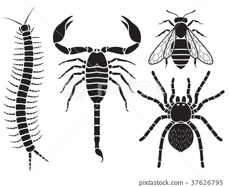 Poisonous insects set. Vector Illustrations. 37626795
