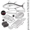 Salmon fish meat. Japan food doodle hand drawn. 37626851