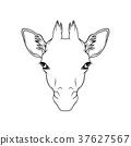 动物 长颈鹿 矢量 37627567