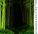 Background bamboo forest at night 37627796