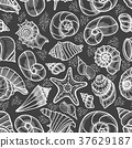 pattern, shell, background 37629187