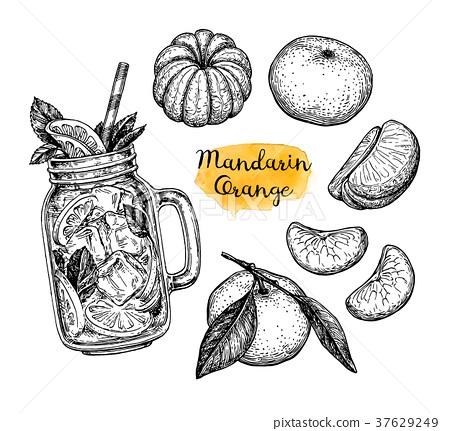 Ink sketch of tangerines. 37629249