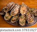 oyster, oysters, eating as much as one likes 37631027