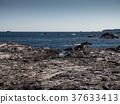 ชายฝั่งทะเล,มหาสมุทร,หิน 37633413
