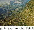 beach, water surface, seaweed 37633419