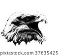 eagle, america, american 37635425