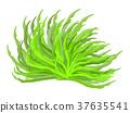 algae vector symbol icon design.  37635541