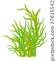 algae vector symbol icon design. 37635542