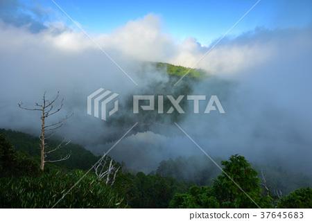 高山湖泊,湖,清晨,水,高山,山,山嵐,雲,霧氣,氣象,森林,太平山森林遊樂區,宜蘭縣,大同鄉 37645683