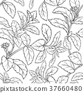 stevia, leaf, background 37660480