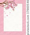 日本現代櫻花框架 37660546