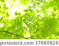 verdure, tender, green 37660826