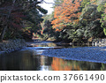 단풍, 강, 이세신궁 37661490