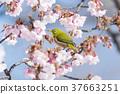 繡眼鳥 鳥兒 鳥 37663251
