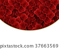 rose, background material, flower 37663569
