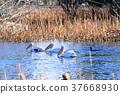 연못, 시노바즈노이케, 시노바즈 연못 37668930