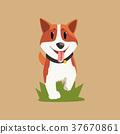 柯基 威爾士矮腳狗 向量 37670861