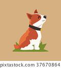 狗 狗狗 威爾斯 37670864