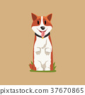 Joyful red-haired corgi standing on hind legs 37670865