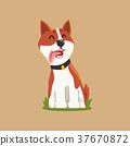 狗 狗狗 威爾斯 37670872
