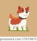 柯基 威爾士矮腳狗 威爾斯 37670875