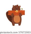 海狸 木头 木 37672003