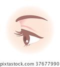 Women's eyes 37677990