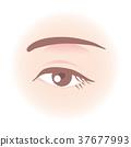 Women's eyes 37677993