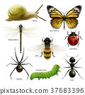 set of colorful insects 37683396