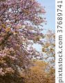 Spring of blooming flowers. 37689741