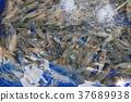 Freshwater shrimp on pond. 37689938