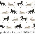 고양이 귀여운 그림 사각형 연속 일러스트 37697014