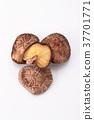 건조, 표고버섯, 버섯 37701771