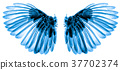 wings of birds on white background 37702374