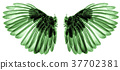 wings of birds on white background 37702381
