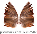 wings of birds on white background 37702502