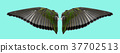 Angel wings an isolated 37702513