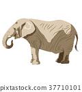 elephant, elephants, african 37710101