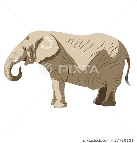 大象的 37710101