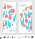 tulip, vector, flower 37711881
