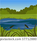 Green summer landscape with lake, nature 37712880