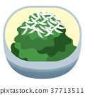 채소 나물, 시금치 나물 37713511
