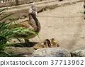 조류, 새, 오리 37713962