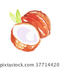 watercolor painting coconut 37714420