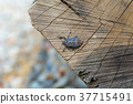 insect, insects, hexapod 37715491