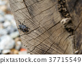 昆虫 insect 昆虫 天牛 Cerambycidae かたつむり 木目 wood grain 37715549