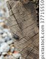 昆虫 insect 昆虫 天牛 Cerambycidae かたつむり 木目 wood grain 37715550