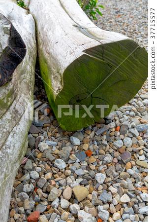 樹幹 Tree Trunk 木頭 wood 木紋 木目 木材 石礫 砂利 Stone gravel 37715577