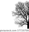 Silhouette of tree. Vector illustration for your 37720708