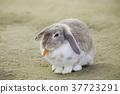 토끼, 동물, 귀엽다 37723291